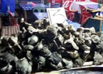 Savoring the Oysters of Tambak