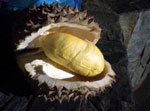 Celebrating Davao's King of Fruits - Durian!